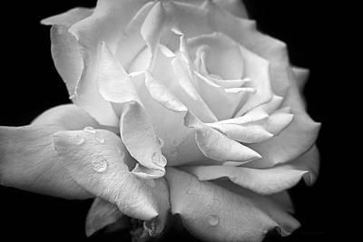 Photograph - Splendor Of A White Rose Black And White by Jennie Marie Schell