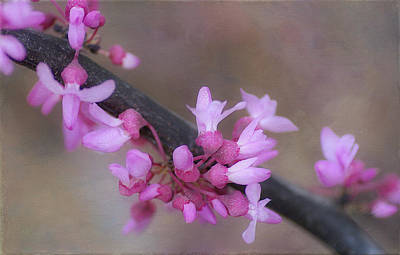 Photograph - Splendor Of Spring 3 by Fraida Gutovich