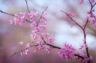 Photograph - Splendor Of Spring 4 by Fraida Gutovich