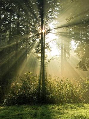 Blazing Sun Photograph - Splendour by Daniel Csoka