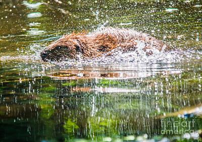 Photograph - Splish Splash by Cheryl Baxter
