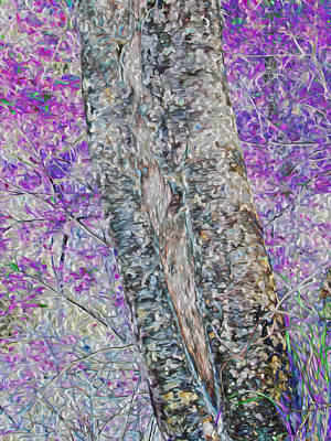 Photograph - Split Bark by Stephanie Grant