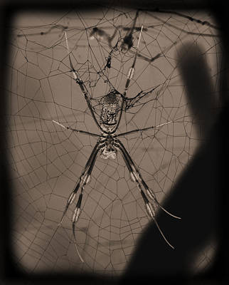 Photograph - Spokey Spider by Suzie Banks