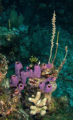 Water Filter Photograph - Sponge Condo by Jean Noren