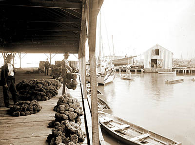 Key West Drawing - Sponge Exchange On Wharf, Key West, Fla, Piers & Wharves by Litz Collection