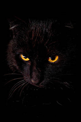 Black Cat Photograph - Spooks Black Cat On Black by Laura Strain