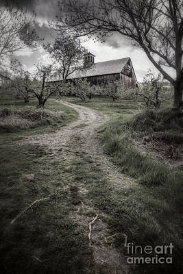 Apple Orchard Photograph - Spooky Apple Orchard by Edward Fielding