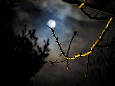 04003 Photograph - Spooky Moon by Donnie Freeman