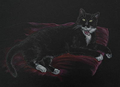 Drawing - Spooky The Cat by Michele Myers