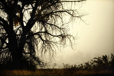Photograph - Spooky Tree by Marilyn Hunt