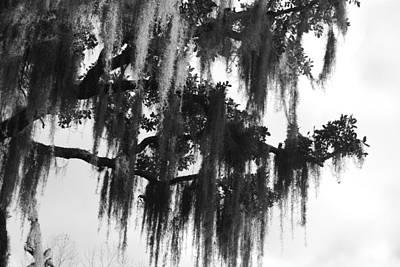 Spooky Trees Art Print by Cyndi Lenz