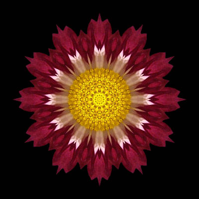 Photograph - Spoon Chrysanthemum I Flower Mandala by David J Bookbinder