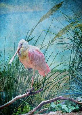 Spoonbill Digital Art - Spoonbill by John Kain