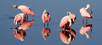 Photograph - Spoonbill Reflections by Ira Runyan