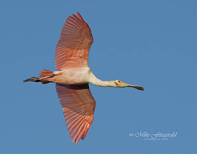 Photograph - Spoonie Fly Over by Mike Fitzgerald