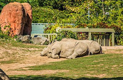 Rhinoceros Photograph - Spooning by Steve Harrington