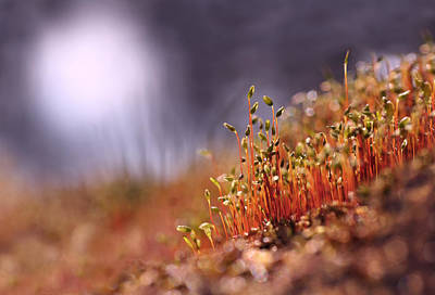 Photograph - Sporophyte Colony by Dreamland Media