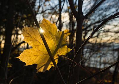 Photograph - Spotlight On Autumn by Georgia Mizuleva