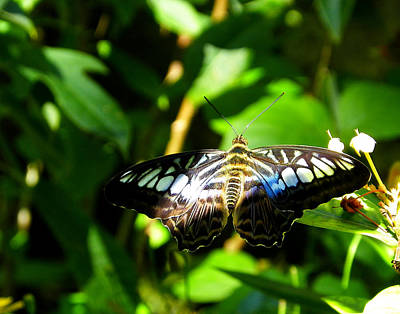 Photograph - Spots And Stripes by Judy Wanamaker