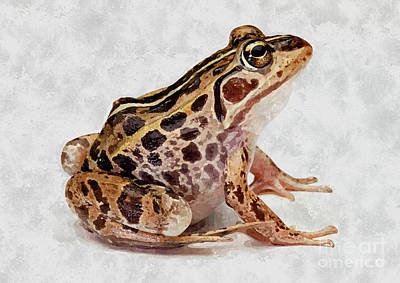 Spring Peepers Painting - Spotted Dart Frog by Lanjee Chee