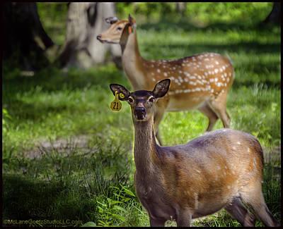 Photograph - Spotted Deer by LeeAnn McLaneGoetz McLaneGoetzStudioLLCcom