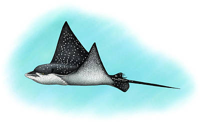 Spotted Eagle Ray Photograph - Spotted Eagle Ray by Roger Hall