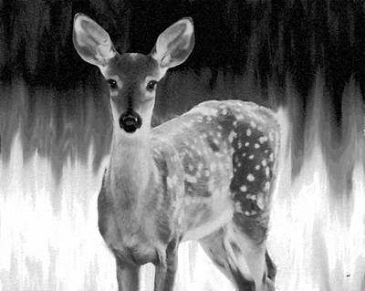 Friendly Digital Art - Spotted Fawn by Will Borden