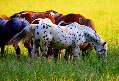 Colorfull Photograph - Spotted Horse by David Lee Thompson