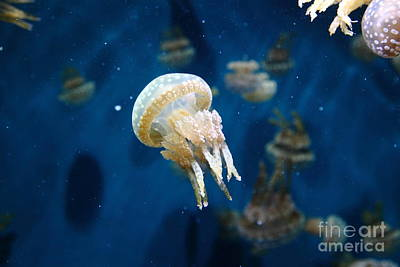 Spotted Jelly Fish 5d24950 Art Print