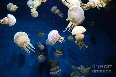 Spotted Jelly Fish 5d24951 Art Print by Wingsdomain Art and Photography