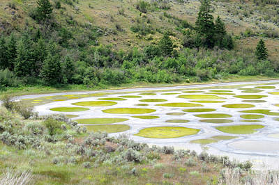 Photograph - Spotted Lake by Frank Townsley