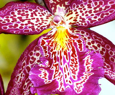 Art Print featuring the photograph Spotted Orchid by Lehua Pekelo-Stearns
