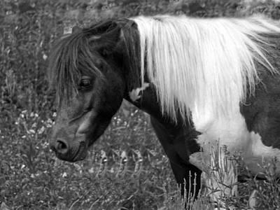 Spotted Pony Art Print