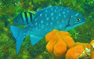 Halifax Art Work Digital Art - Spotted Surgeon Fish by John Malone