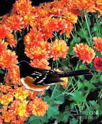 Photograph - Spotted Towhee On Orange Flowers by Janette Boyd