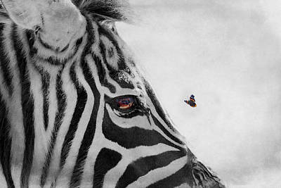 Photograph - Spotted Vs Striped by Emily Stauring