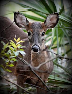 Photograph - Spotted You Button Buck by Sheri McLeroy