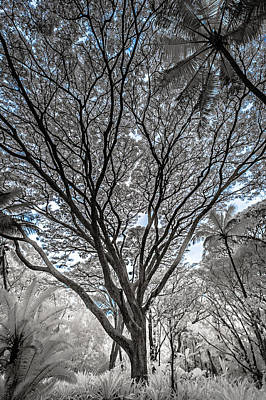 Photograph - Sprawling Tree In Infrared by Jason Chu