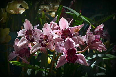 Photograph - Spray Of Mauve Orchids by Carla Parris