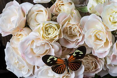 Spray Roses Art Print by Garry Gay