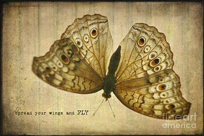 Photograph - Spread Your Wings And Fly by Diane Enright