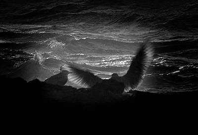Photograph - Spreading My Wings. by Dale Stillman