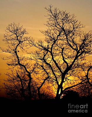 Sunset Photograph - Spreading by Surendra Silva