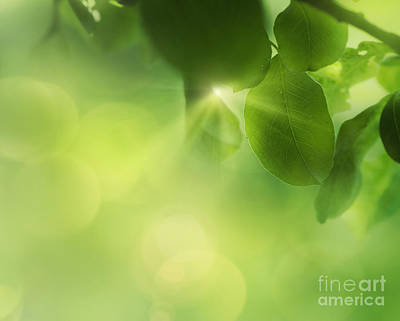 Npetolas Photograph - Spring Apple Leaf Background by Mythja  Photography