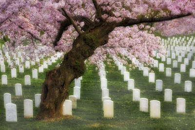 Spring Arives At Arlington National Cemetery Print by Susan Candelario