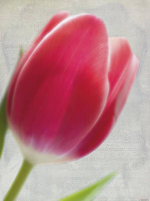 Photograph - Spring Art - Dreaming Of Spring by Jordan Blackstone