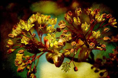 Photograph - Spring Artistry by Milena Ilieva