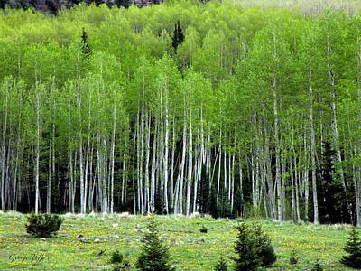 Photograph - Spring Aspen by George Tuffy