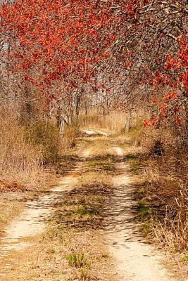 Photograph - Spring At Bear Creek by Kristia Adams