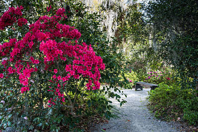 Photograph - Spring At Magnolia Plantation 2 by Walt  Baker